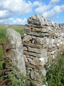 The classic dry-stone wall structure, wide base stones, long through stones for stability, tapering up to sharp points to deter escaping sheep.
