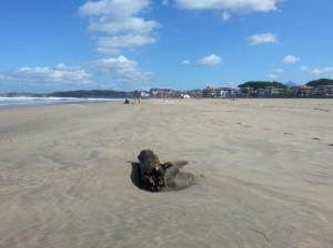 Log beach