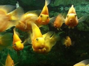 My fish friends 1