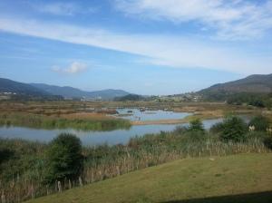 Urdaibai marsh