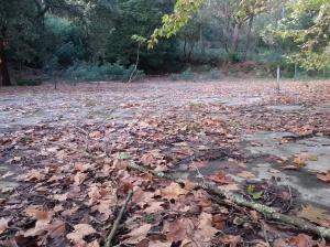 An autumnal haunted tennis court