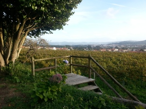 The farm overlooks the Atlantic, 3kms from Viana do Castello.