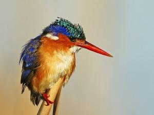 kingfisher-83836_1280